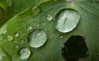 Как спастись от кислотных дождей?