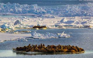 Экологические проблемы Чукотского моря