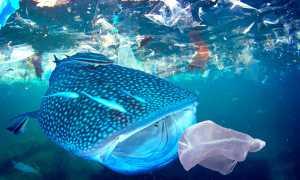 Загрязнение Мирового океана как экологическая проблема