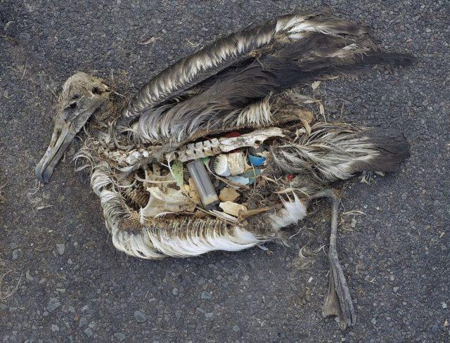 Мусор в птицах