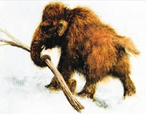 детёныш мамонта