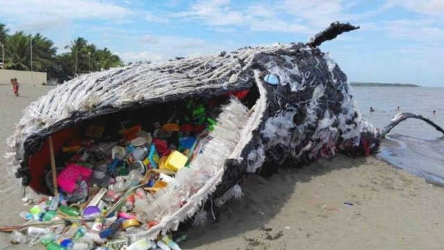 Пластик в желудках рыб