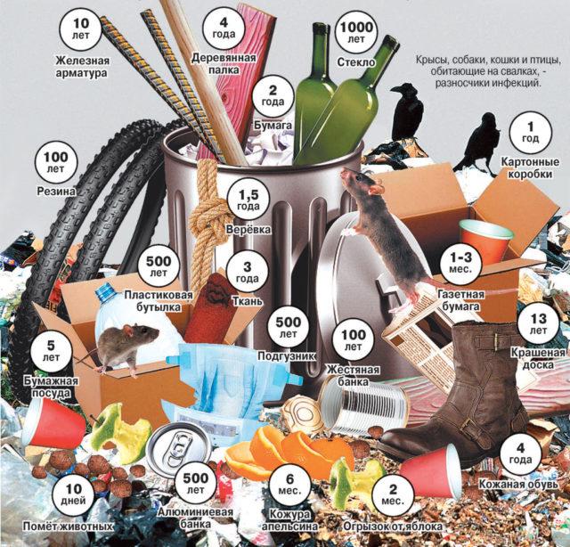 Сроки разложения бытовых отходов