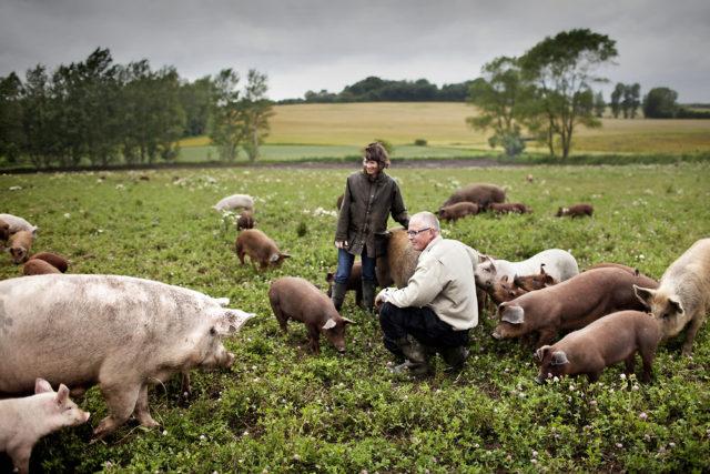 Сельское хозяйство в Дании