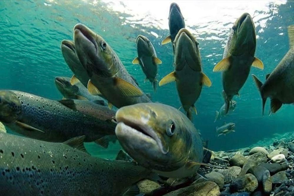Экологические проблемы Каспийского моря и пути их решения
