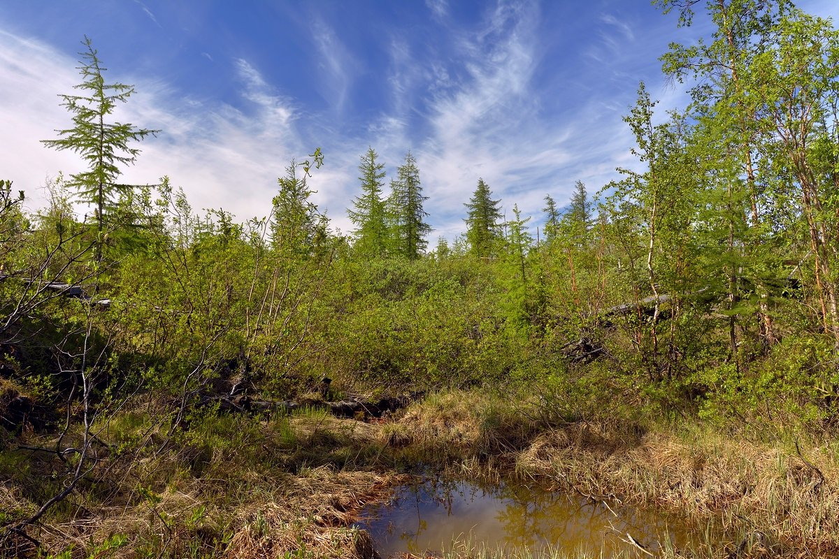Экологические проблемы тундры и пути их разрешения
