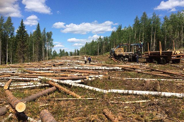 Вырубка лесных массивов