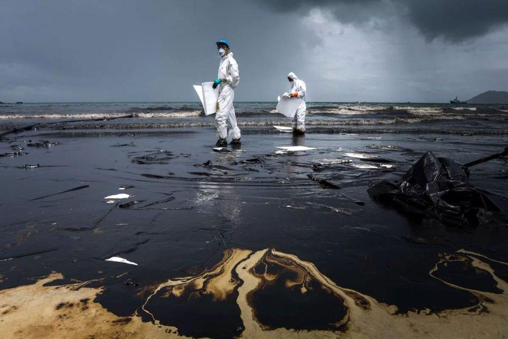 Что такое экология и что она изучает