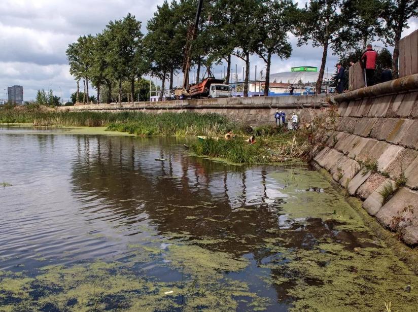 Экологические проблемы Челябинской области и пути их решения