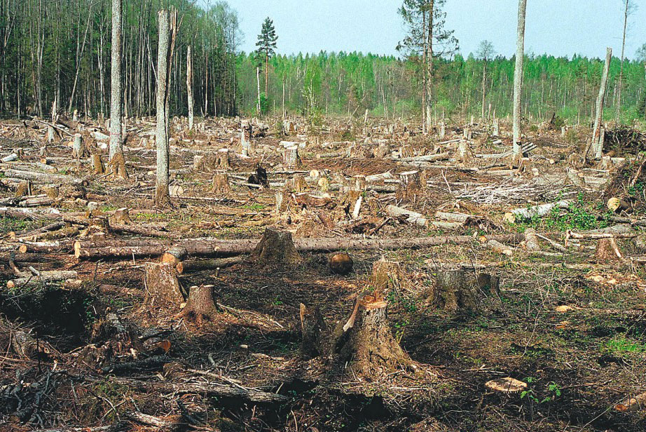 Уничтожение лесов